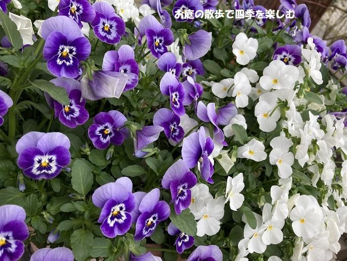 biora66_2021041110345903b.jpg
