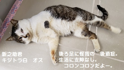 sinnosuke_20200318102729987.jpg