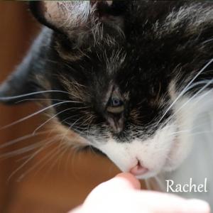 Rachel01.jpg