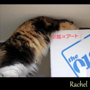 Rachel04.jpg