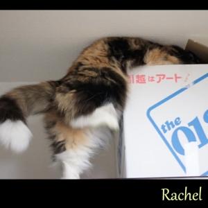 Rachel05.jpg