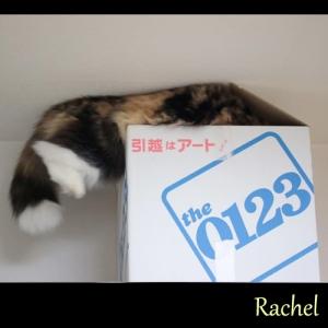Rachel06.jpg