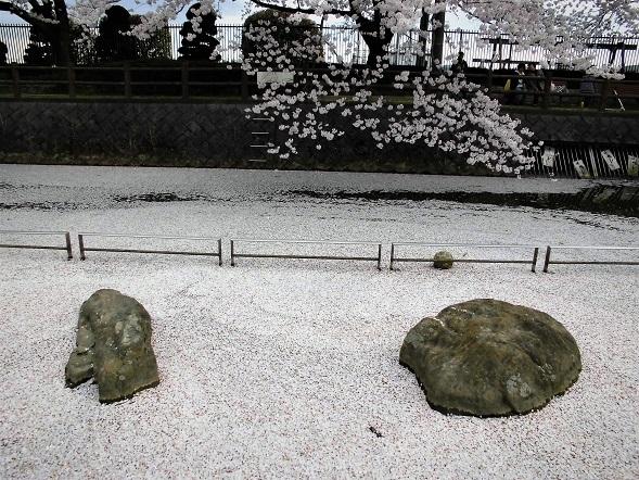 15.4.3 大久保浄水場の桜  (6)