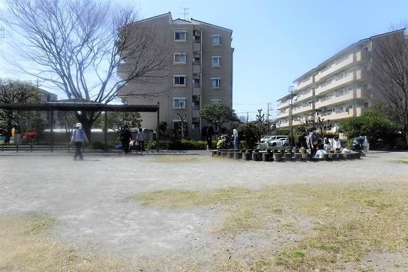 20.3.26 孫第2公園砂場他 (83)
