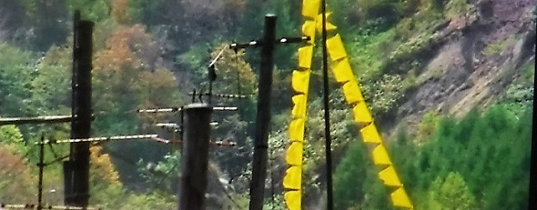 20.3.28 宮城まり子、大久保浄水場の🌸、映画幸せの黄色いハンカチ (6)