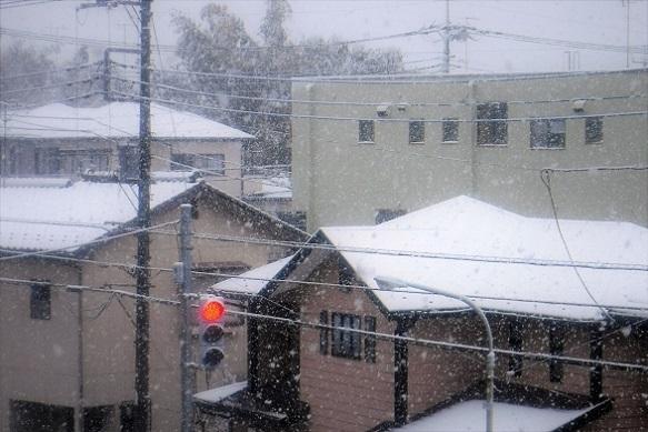 20.3.29 雪🌸 映画CURE ほか (41)