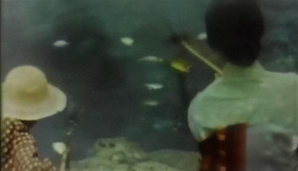 3 20.4.2 煮魚めじな。映画ろくでなし、青幻記、東京行進曲。 (31)