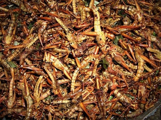 3 08.2.29昆虫料理屋3 台 (11)