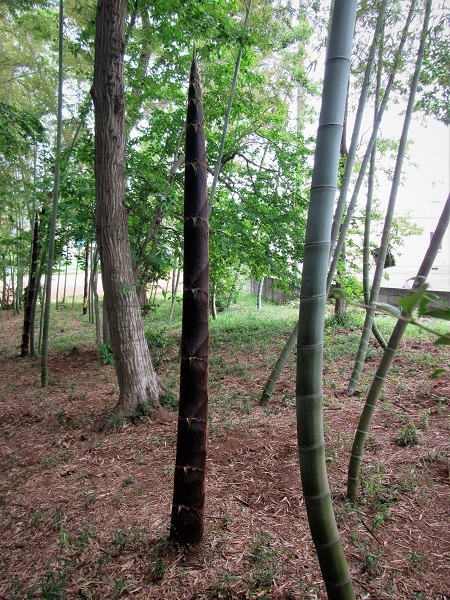 7 20.5.4 散歩と花と森の道 (135)