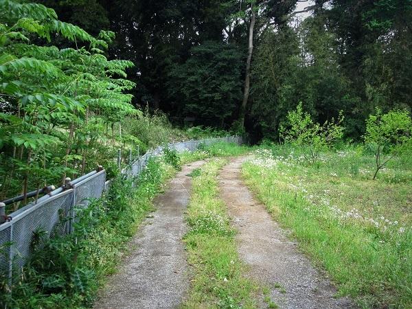 1 20.5.4 散歩と花と森の道 (78)
