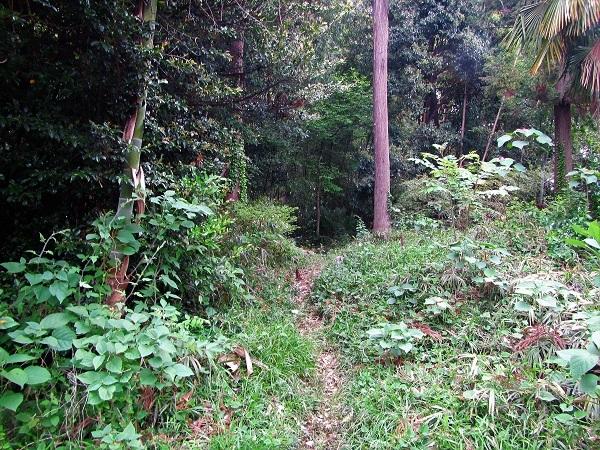 4 20.5.4 散歩と花と森の道 (112)