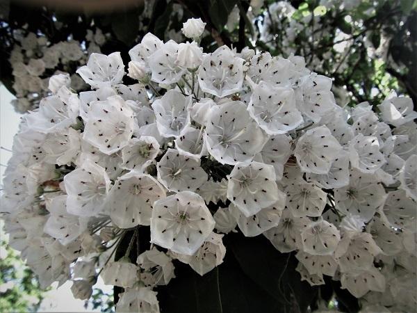 20.5.17 散歩の花ほか (90)