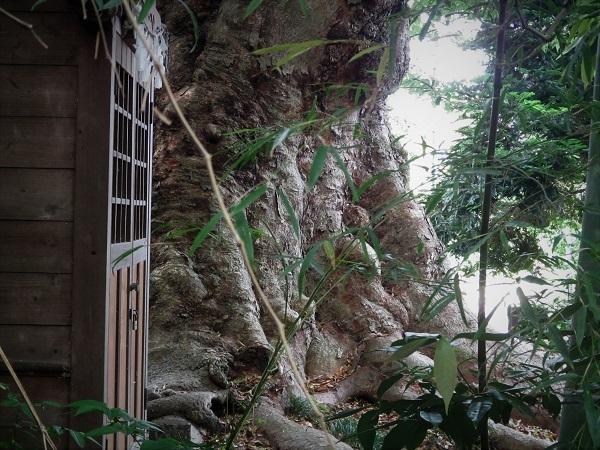 1 20.5.30 清河寺、映画「白昼の通り魔」ほか (157)