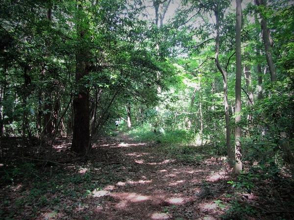 3 20.6.17 リハリビ歩行花の丘公園&「北コース (96)