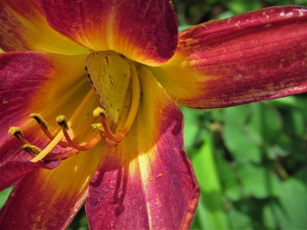 3 20.6.17 リハリビ歩行花の丘公園&「北コース (69)