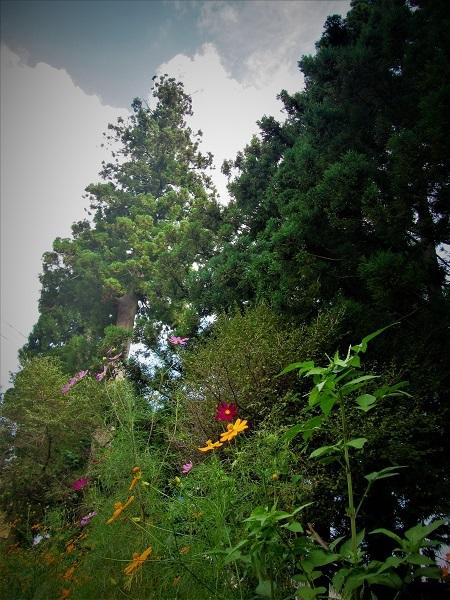 4 20.9.11 日光杉並木と大谷川公園 (75)