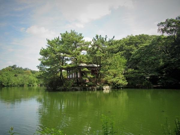 3 20.9.15 スケッチハイク石神井公園 (19)