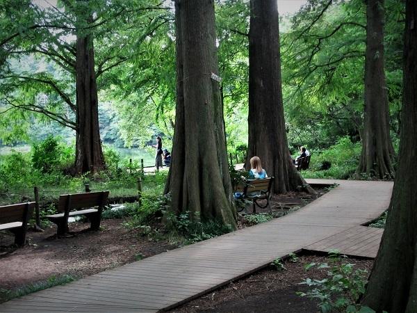 4 20.9.15 スケッチハイク石神井公園 (116)