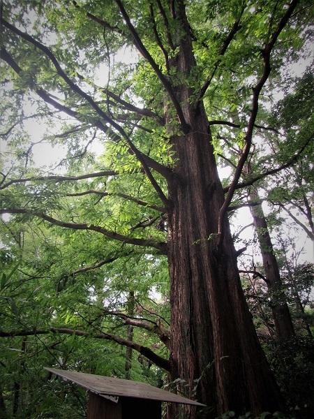 7 20.9.15 スケッチハイク石神井公園 (127)