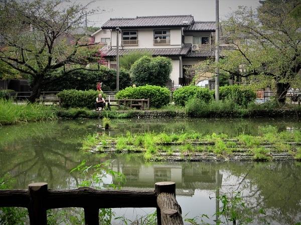 16 20.9.15 スケッチハイク石神井公園 (147)