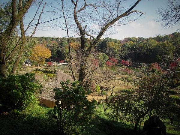1 20.11.20  薬師池と七国山、箱根 つつじ荘 (37)