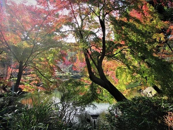 2 20.11.20  薬師池と七国山、箱根 つつじ荘 (77)