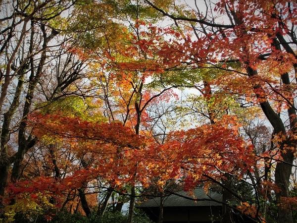 3 20.11.20  薬師池と七国山、箱根 つつじ荘 (160)