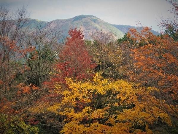 4 20.11.20  薬師池と七国山、箱根 つつじ荘 (186)