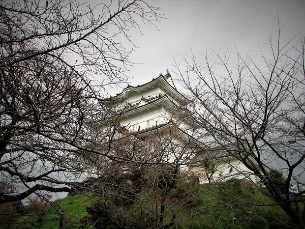 5 20.11.20  薬師池と七国山、箱根 つつじ荘 (275)