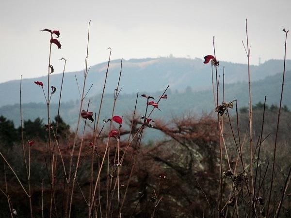20.12.2 丸山ハイク (42)