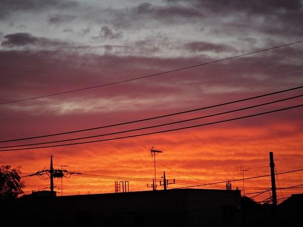 20.12.25 朝陽、田作り (14)