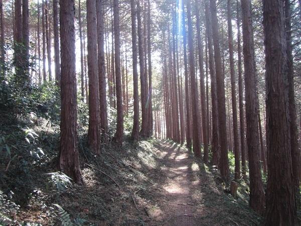 6 21.1.3 武蔵嵐山ー小倉城跡ー物見山 (121)