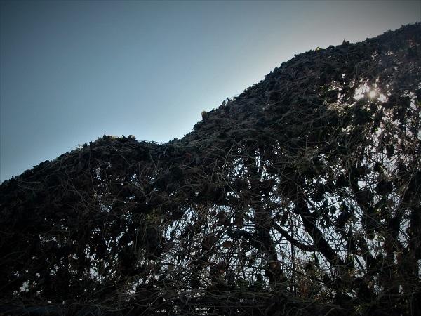2 20.1.7 散歩鴨川北コース。映画「陽暉楼」ほか (48)