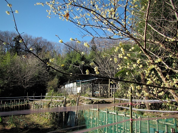 6 21.1.31 鐘撞堂山~虎の岡城~円良田湖~少林寺 (11)