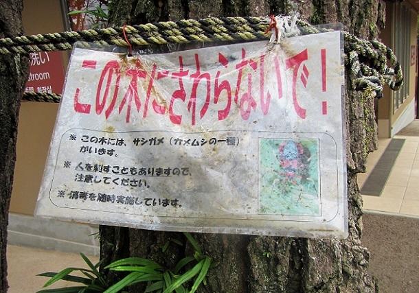 3 20.1.26  柿田川湧水公園 (112)