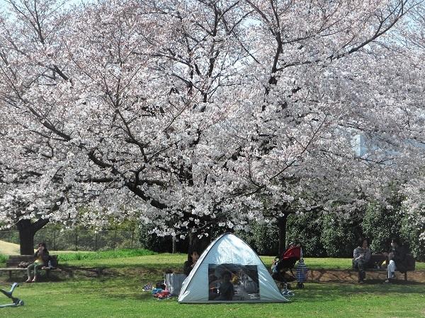 1 花見 21.3.26 🌸花の丘公園  (44)