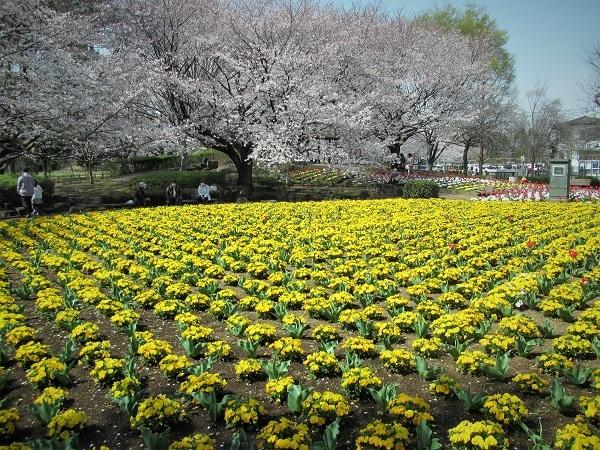 8 花壇 21.3.26 🌸花の丘公園  (108)