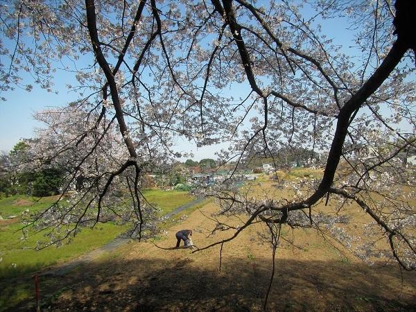 10 農夫 21.3.26 🌸花の丘公園  (74)