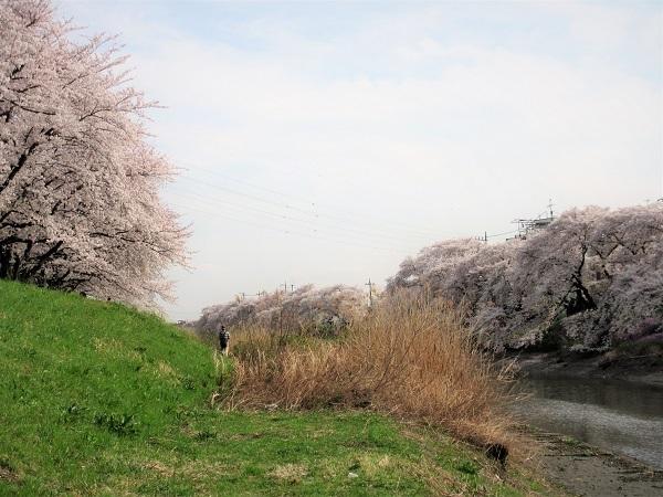 3 21.3.29 🌸青葉園水辺の里、三橋運動公園、氷川神社  (58)