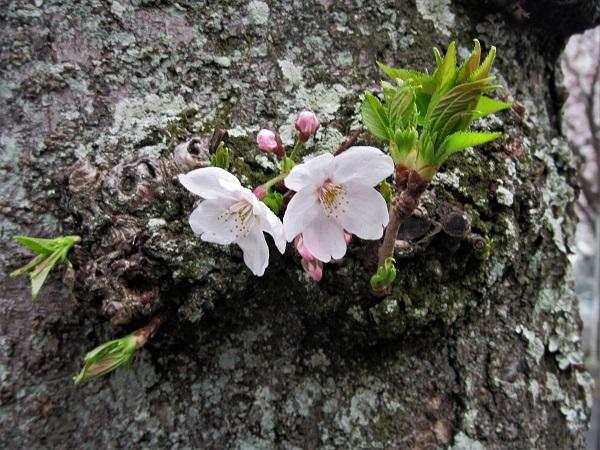 8 21.3.25 鷹取山岩トレ  (186)