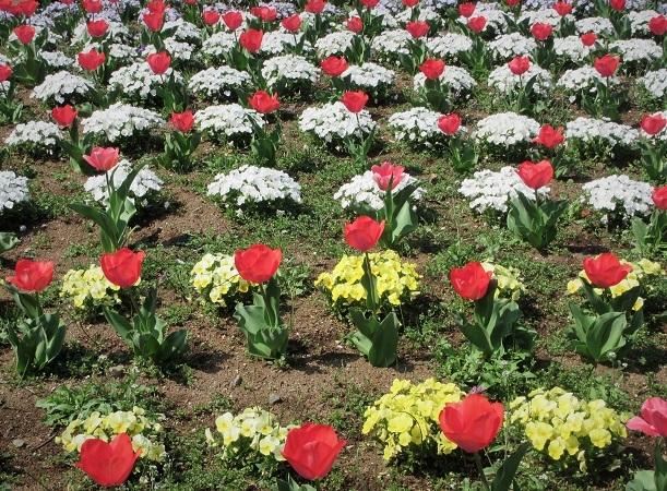 12 21.3.26 🌸花の丘公園  (110)