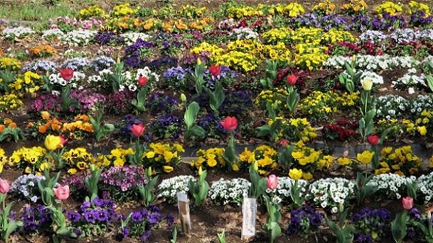 13 21.3.29 🌸青葉園水辺の里、三橋運動公園、氷川神社  (105)