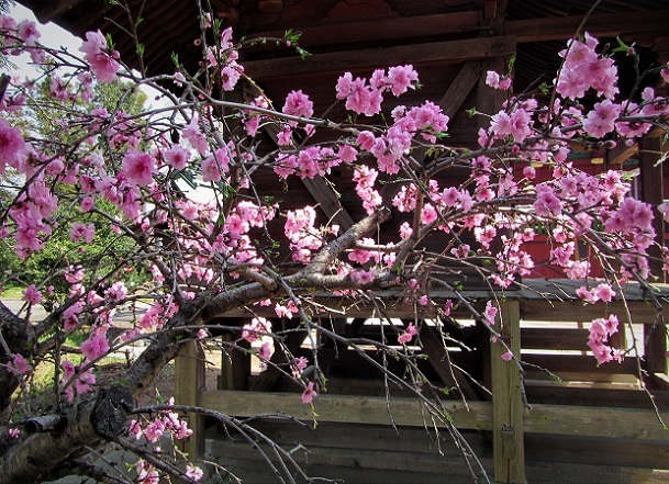 15 鴨川北コース散歩、巌頂院 (151)