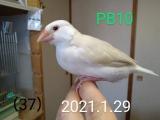 PB11ちゃん生後37日目