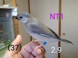 NT1〜青足環