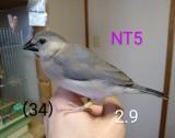 NT5〜黄色足環
