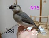 NT6〜水色足環