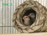 2羽ケージのつぼ巣