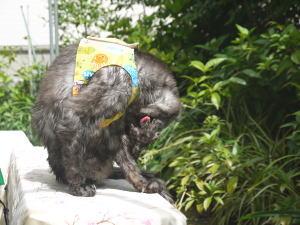 洗われた猫
