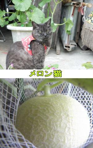 メロンと猫